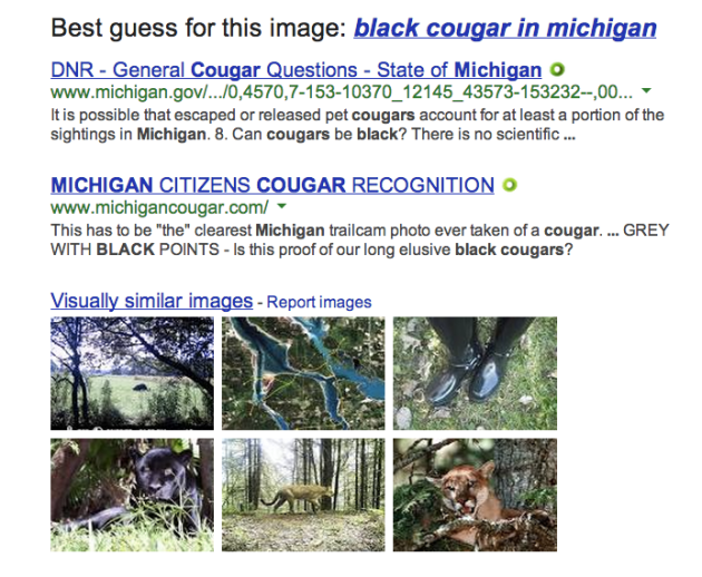 Black cougar in michigan
